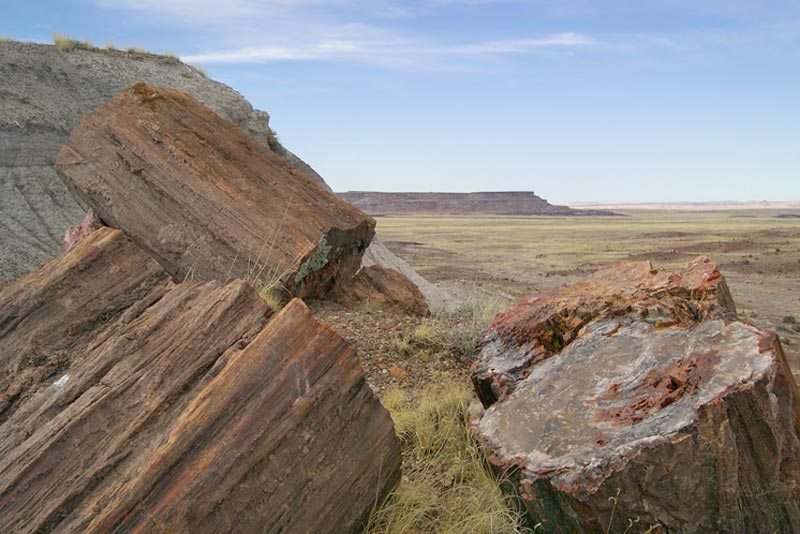 gỗ hóa thạch là gì