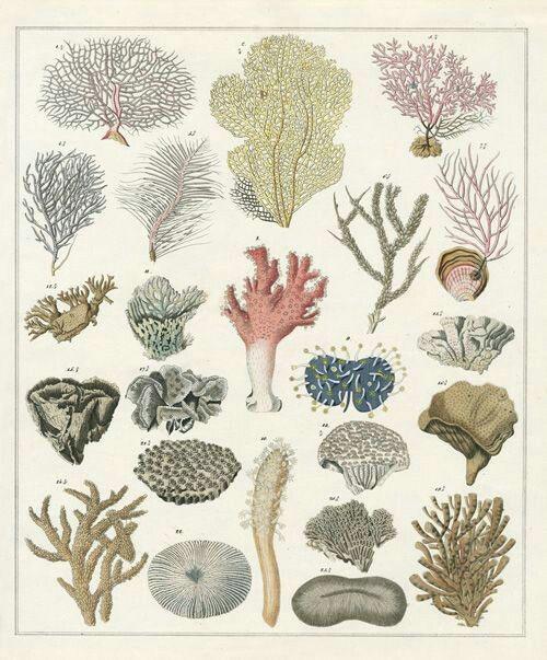 Hình ảnh mô phỏng màu sắc các loại san hô